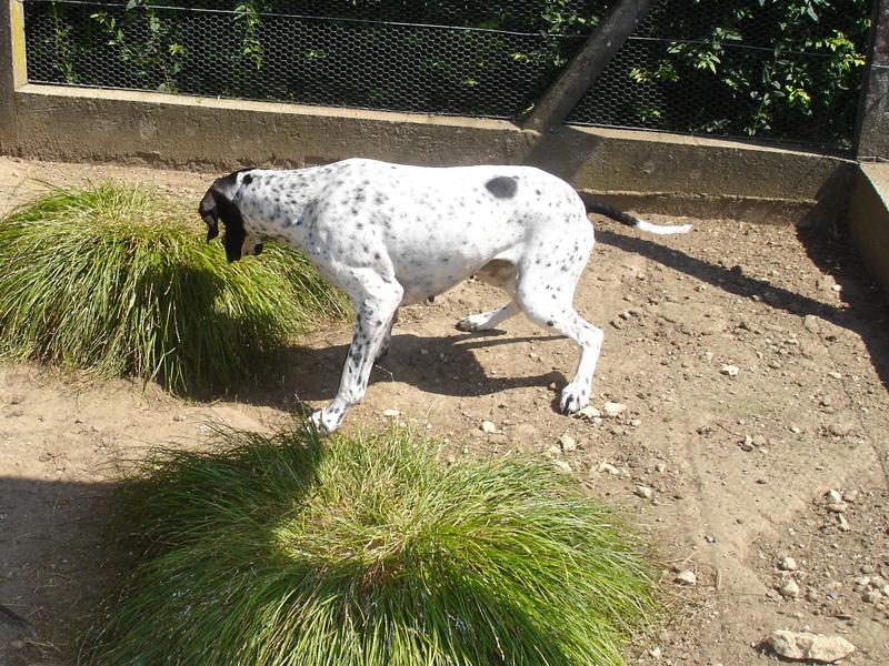 Pension et garderie pour chiens en Charente-Maritime (17)